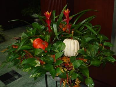 Blooming Bowl with Fall Color.JPG